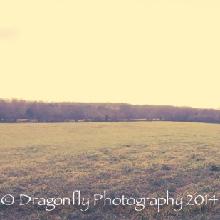 Chattanooga2014-1043